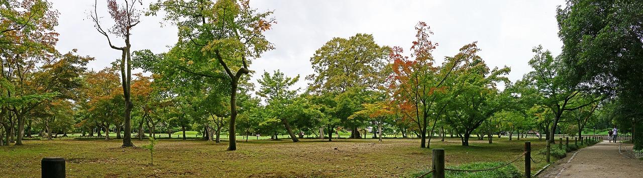 20180922 後楽園今日の園内千入の森の楓の様子ワイド風景 (1)