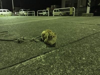 北条湾の茶トラ猫
