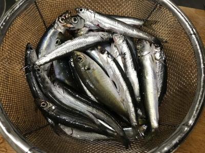 腸を取り除いた青魚