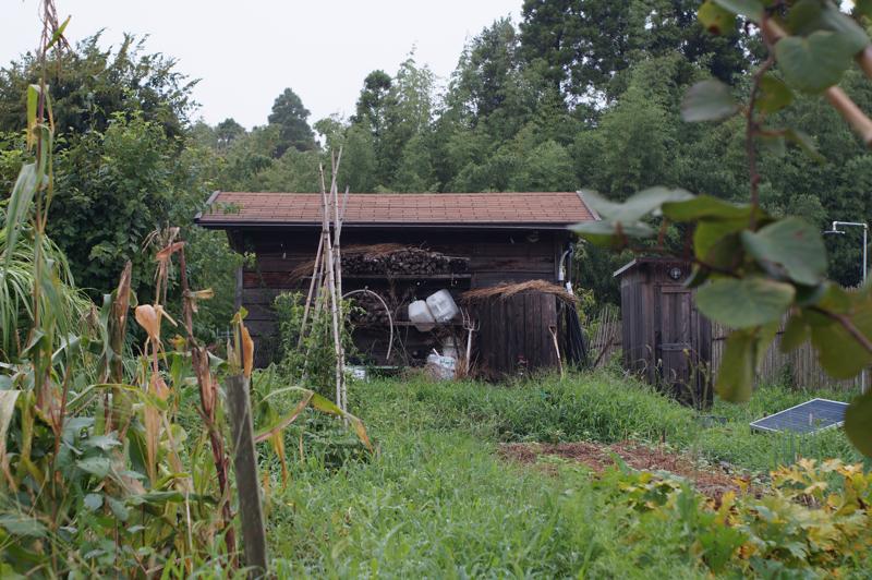夏の房総フィールド 草刈り前の畑