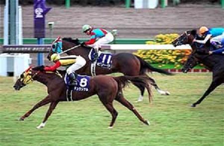 【競馬ネタ】3大最高に盛り上がったスプリンターズS!フラワーパーク、デュランダル、あとひとつは?
