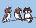 龍魔猫めいが333 (1)