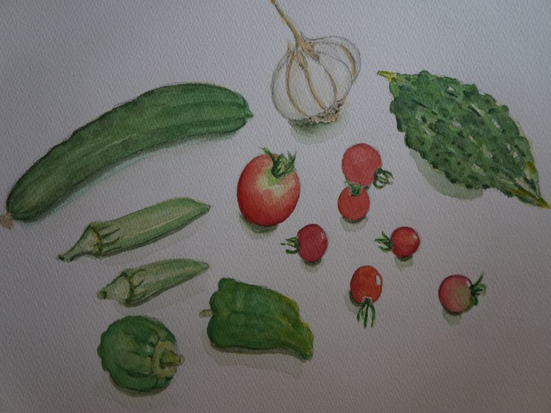収穫野菜の水彩画