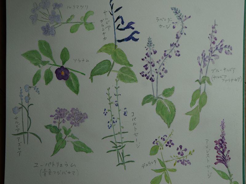 水彩画 今咲いてるお気に入りの花
