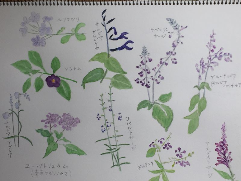 水彩画 紫色の花