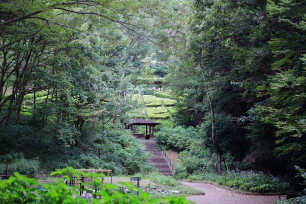 雨の東高根森林公園00059671