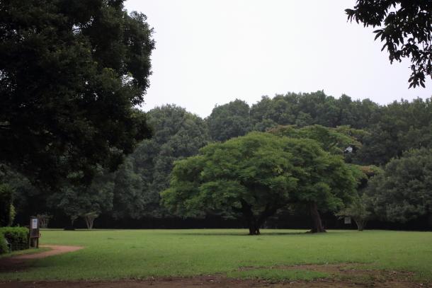 雨の東高根森林公園00059701
