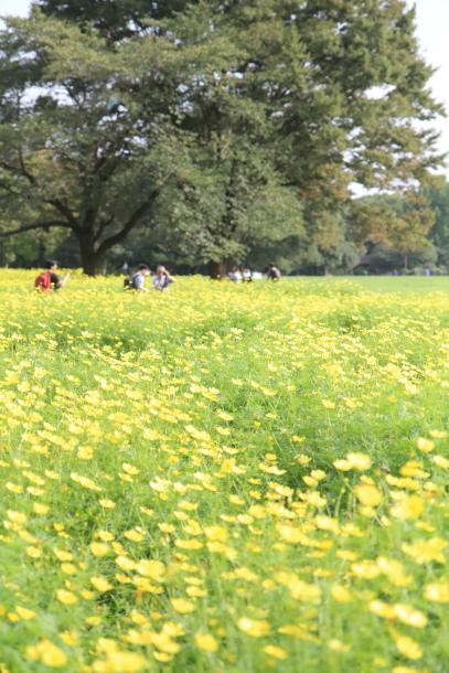 昭和記念公園 ヒガンバナEOS00060297