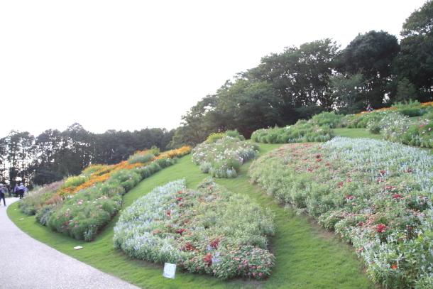 里山ガーデン秋00060623