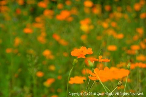 2018秋の花