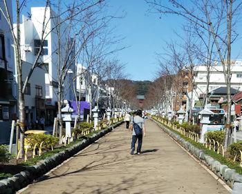10/6 鎌倉八幡宮への段葛