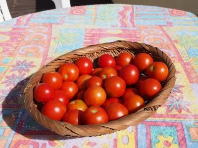 Tomato_sauce_Pasta_1809-102.jpg