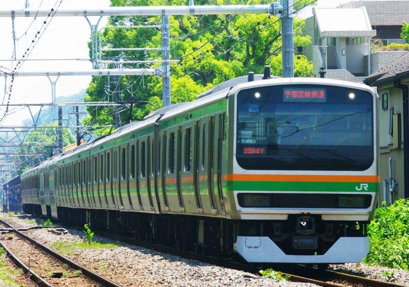 続・シリウスの線路際のロマンを求めて  5月29日撮影 横須賀線 大船~北鎌倉間 485系のついでに撮影したもの