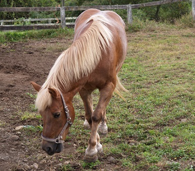 清里のお馬さん