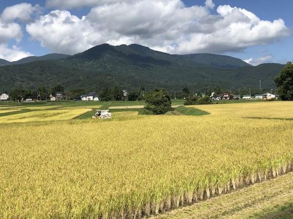 2018-09-23 稲刈り