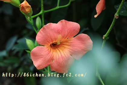 flower0814.jpg