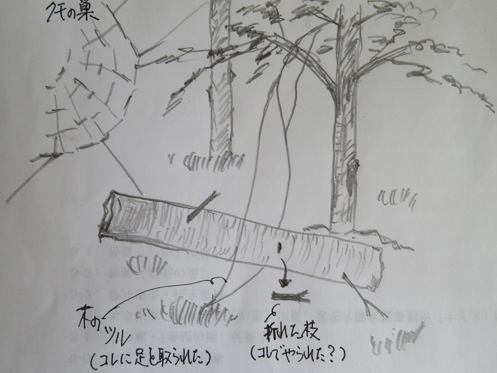 53倒木IMG_4823