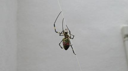 1裏庭の蜘蛛IMG_5020