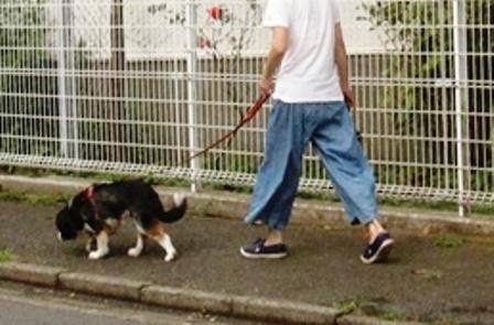 20180901 散歩2-5