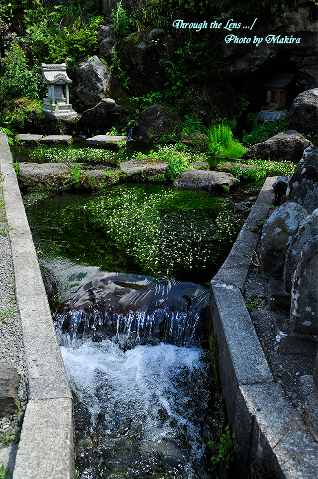 湧水水源7