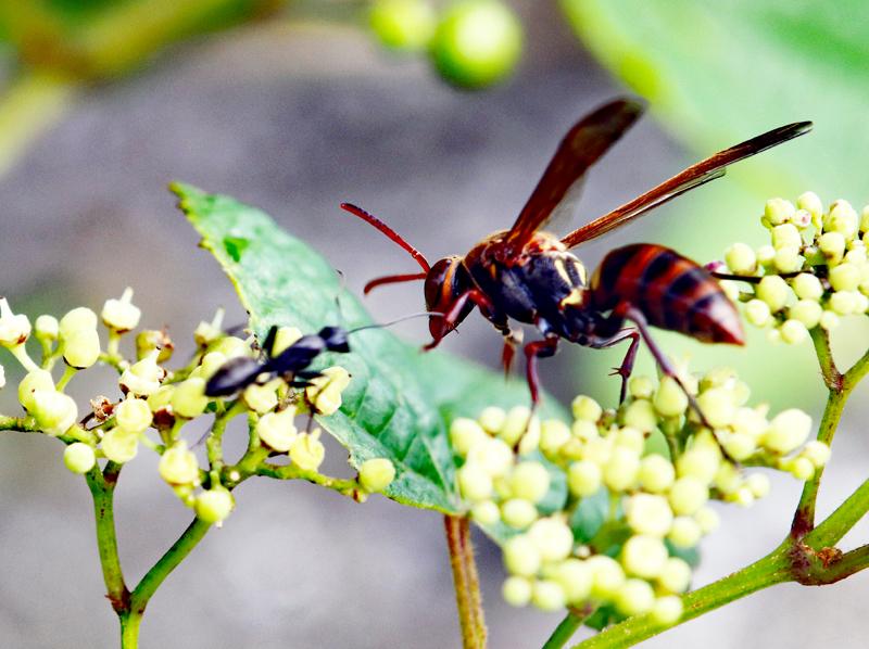 アリとハチ
