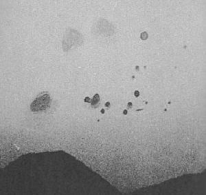 amoeba3.jpg