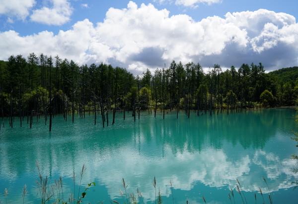 青い池 ブ