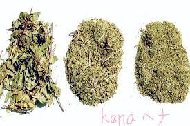 hennna.png