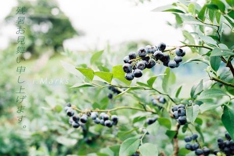 blueberry_1_20180814234516138.jpg