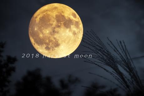 harvest-moon-2018.jpg