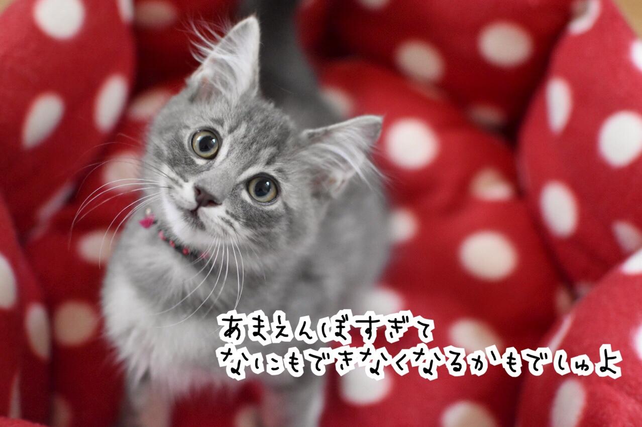 fc2blog_201809291234403ea.jpg