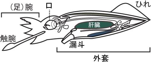 s-body.jpg