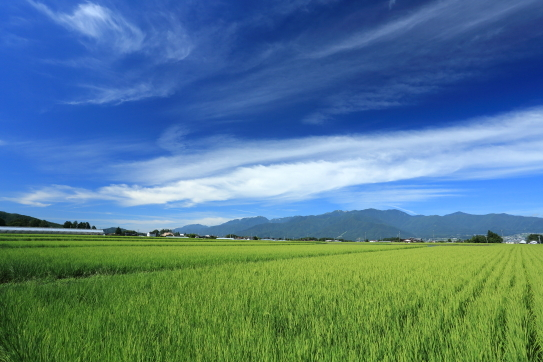 伊那米の水田地帯と青空の雲