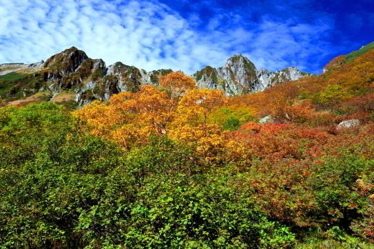 緑葉の中に紅葉始まる千畳敷
