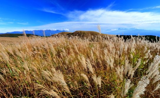 薄の草原に浮かぶ八ヶ岳と南アルプス