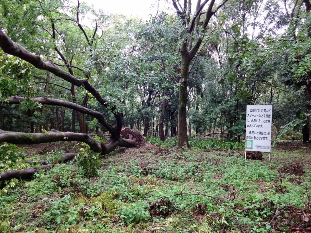 市民の森DSC01093