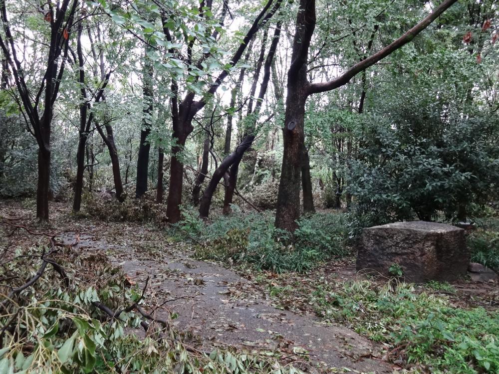 市民の森DSC01095