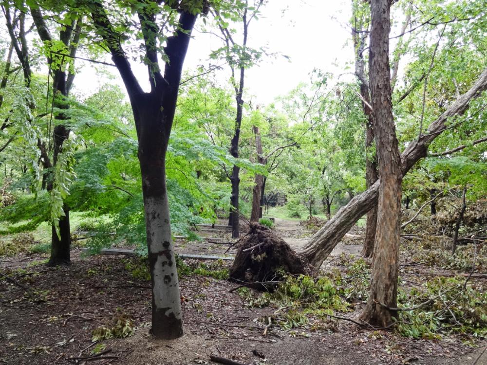 飛騨の森DSC01122