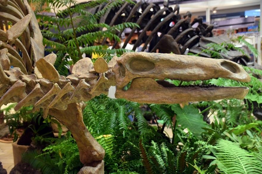 恐竜ランド (3)