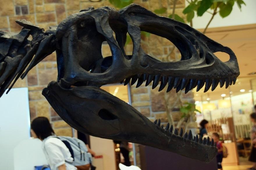 恐竜ランド (8)