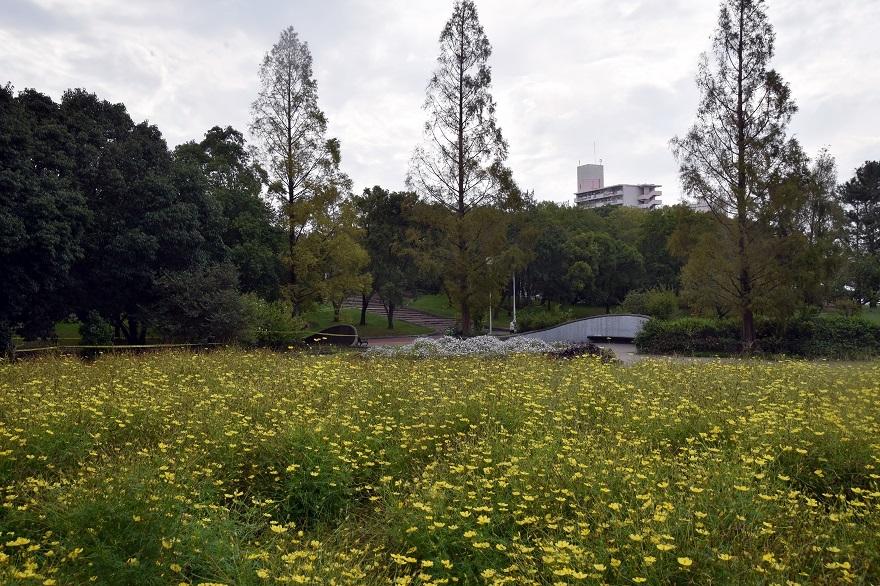 初秋の久宝寺 (9)