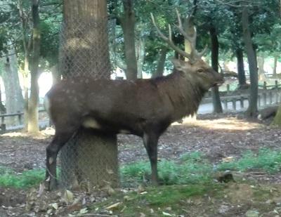 鹿さん♪201810052
