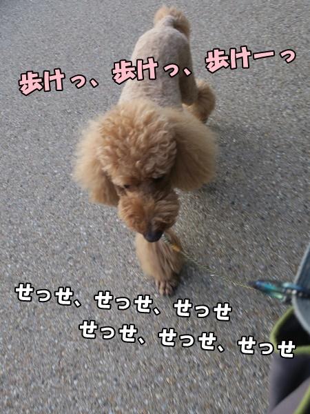 IMG_528620181004.jpg