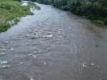 雨後の濁流