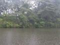 驟雨の池畔