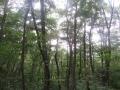雨のコナラ森