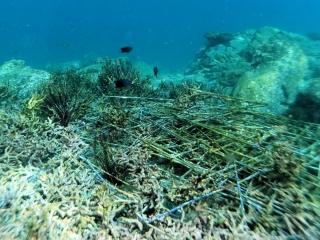 真珠養殖のカゴ網07_海底ゴミ