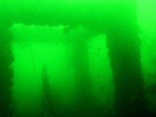 緑の海中02