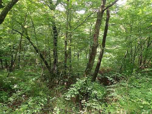 s-森林②20180830