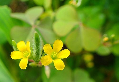 s-14黄色の花②20180907